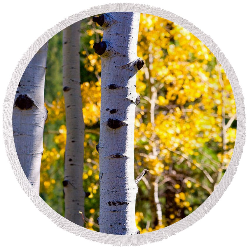 Aspens Round Beach Towel featuring the photograph Aspen Color by James BO Insogna