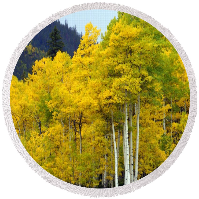 Fall Colors Round Beach Towel featuring the photograph Aspen Fall by Marty Koch