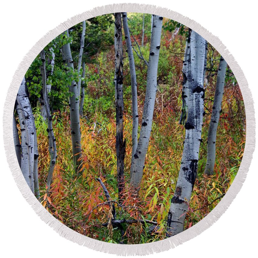 Grand Teton National Park Round Beach Towel featuring the photograph Aspen In Fall by Marty Koch