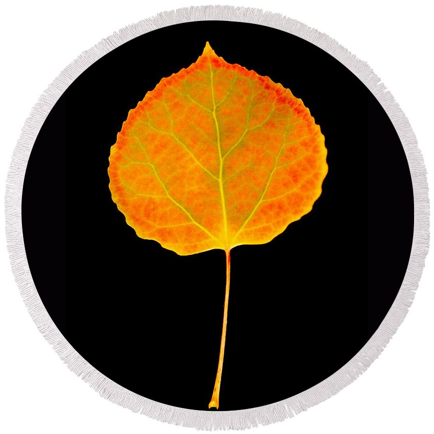 Leaf Round Beach Towel featuring the photograph Aspen Leaf by Marilyn Hunt