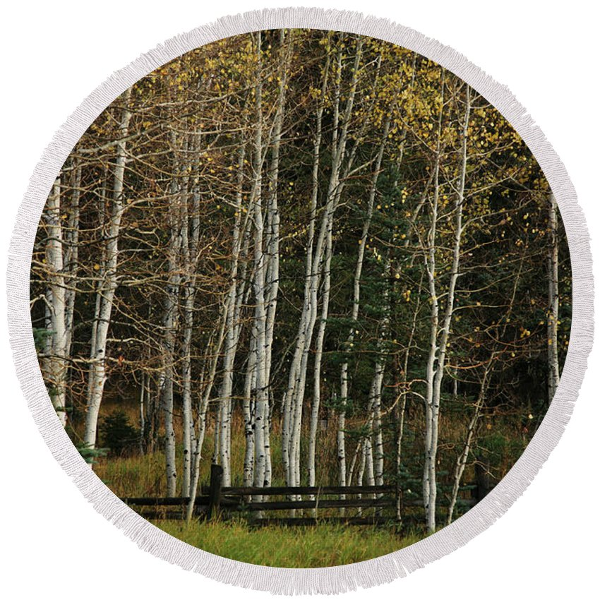 Landscape Round Beach Towel featuring the photograph Aspens In The Fall by Timothy Johnson