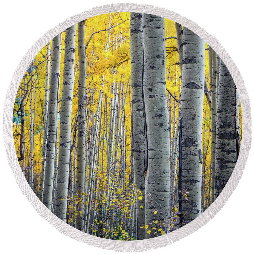 America Round Beach Towel featuring the photograph Aspens by Inge Johnsson