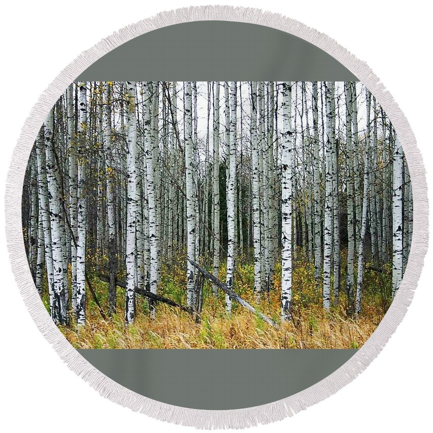 Aspens Round Beach Towel featuring the photograph Aspens by Nelson Strong