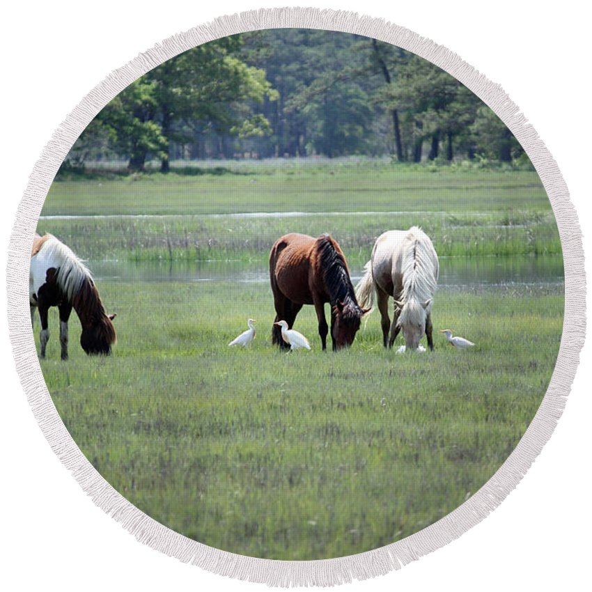 Maryland Round Beach Towel featuring the photograph Assateague Island - Wild Ponies And Their Buddies by Ronald Reid