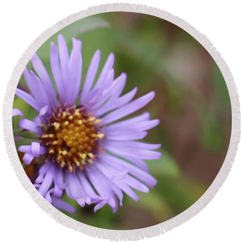 Wild Flower Round Beach Towel featuring the photograph Aster Flower by David Bigelow