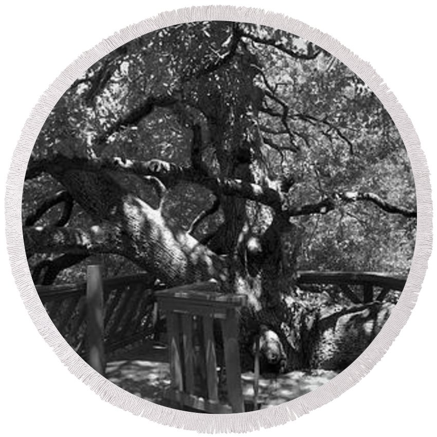 Oak Tree Round Beach Towel featuring the photograph Attack Of The Oak by Douglas Craig
