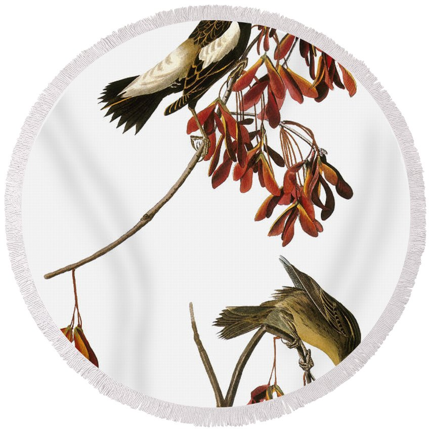1838 Round Beach Towel featuring the photograph Audubon: Bobolink by Granger