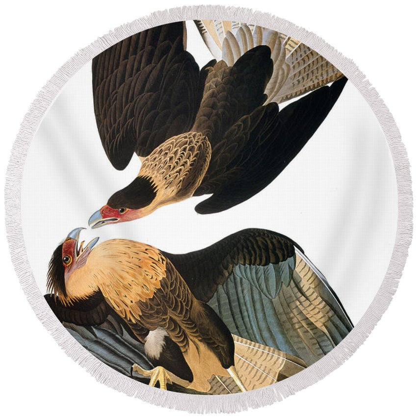 1827 Round Beach Towel featuring the photograph Audubon: Caracara, 1827-38 by Granger
