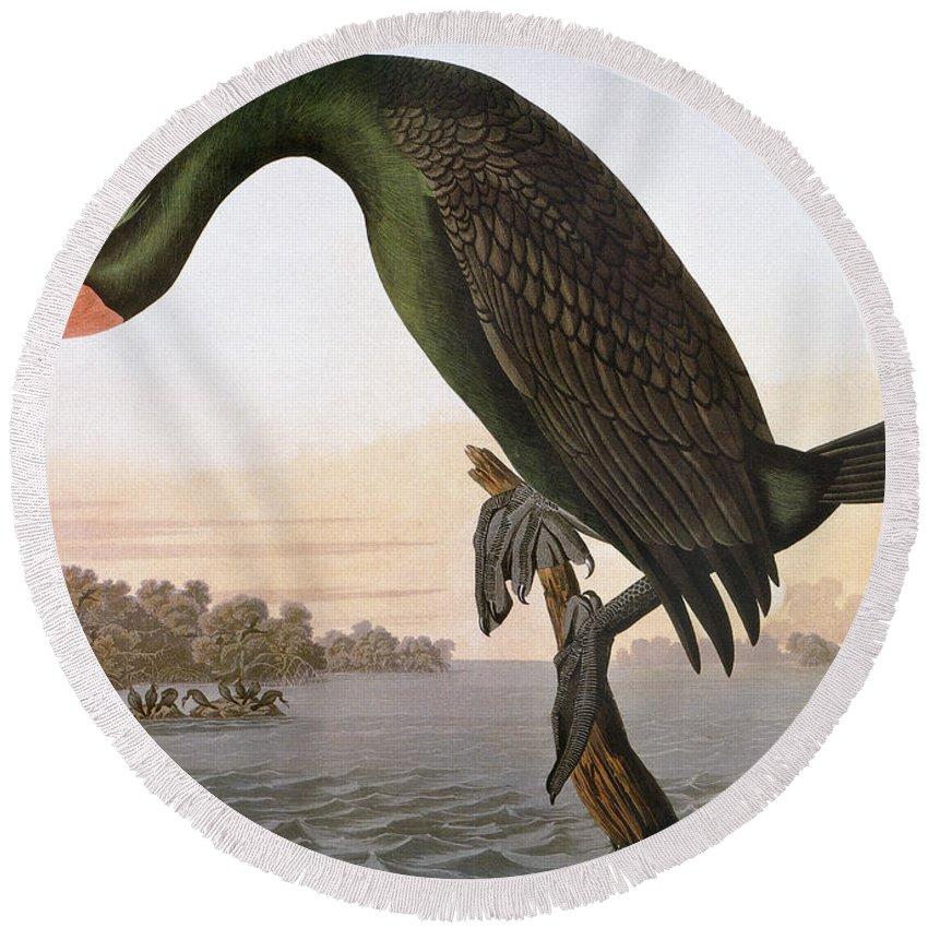 1838 Round Beach Towel featuring the photograph Audubon: Cormorant by Granger