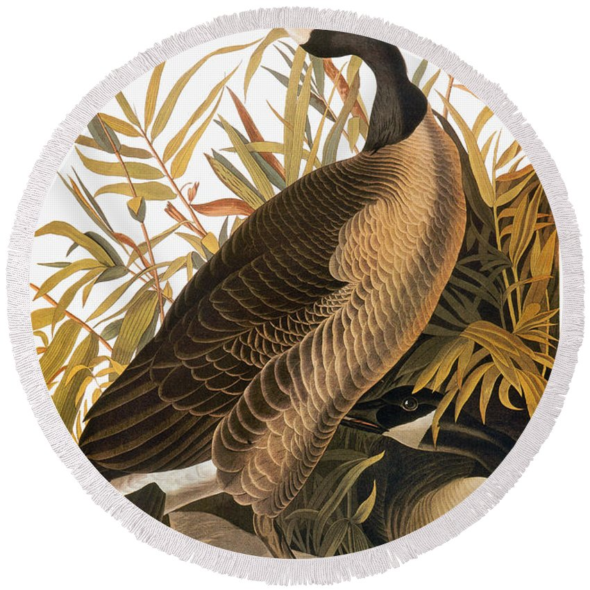 1838 Round Beach Towel featuring the photograph Audubon: Goose by Granger