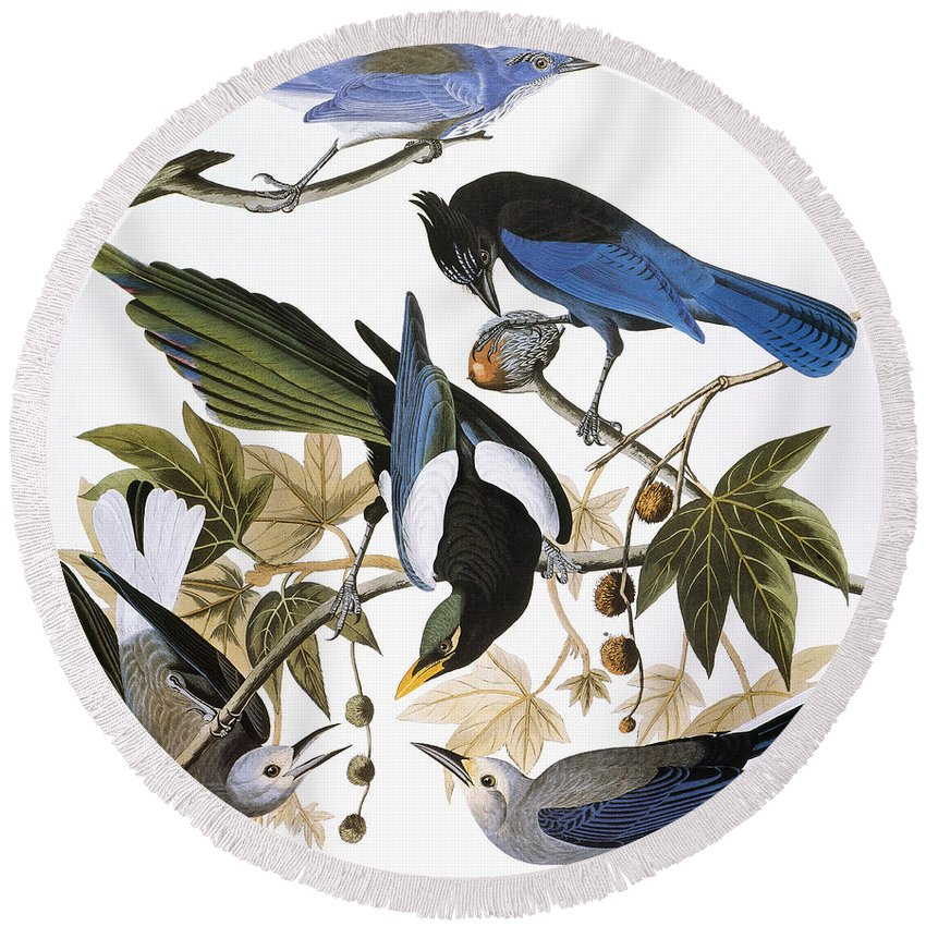 1838 Round Beach Towel featuring the photograph Audubon: Jay And Magpie by Granger
