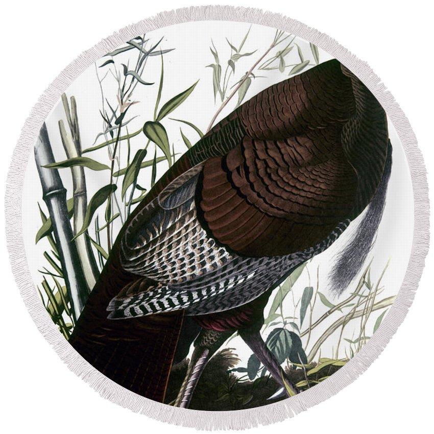 1838 Round Beach Towel featuring the photograph Audubon: Turkey by Granger