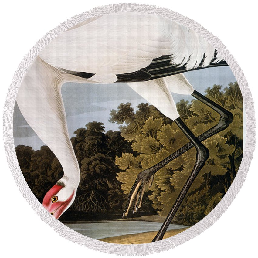 1827 Round Beach Towel featuring the photograph Audubon: Whooping Crane by Granger