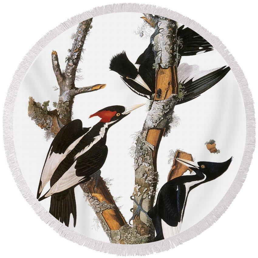 1838 Round Beach Towel featuring the photograph Audubon: Woodpecker by Granger