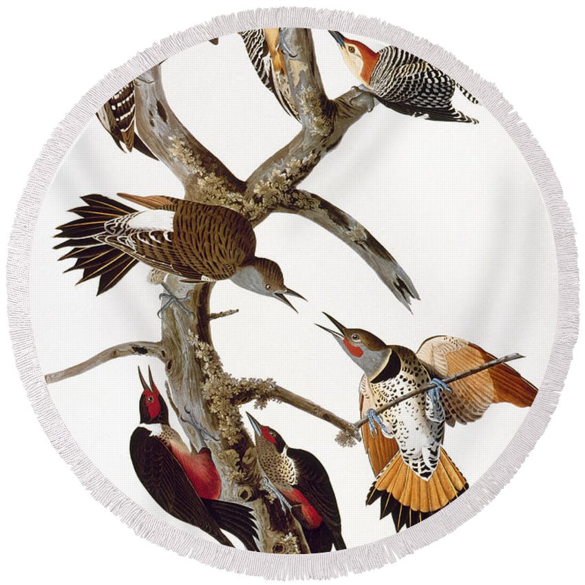 1838 Round Beach Towel featuring the photograph Audubon: Woodpeckers by Granger