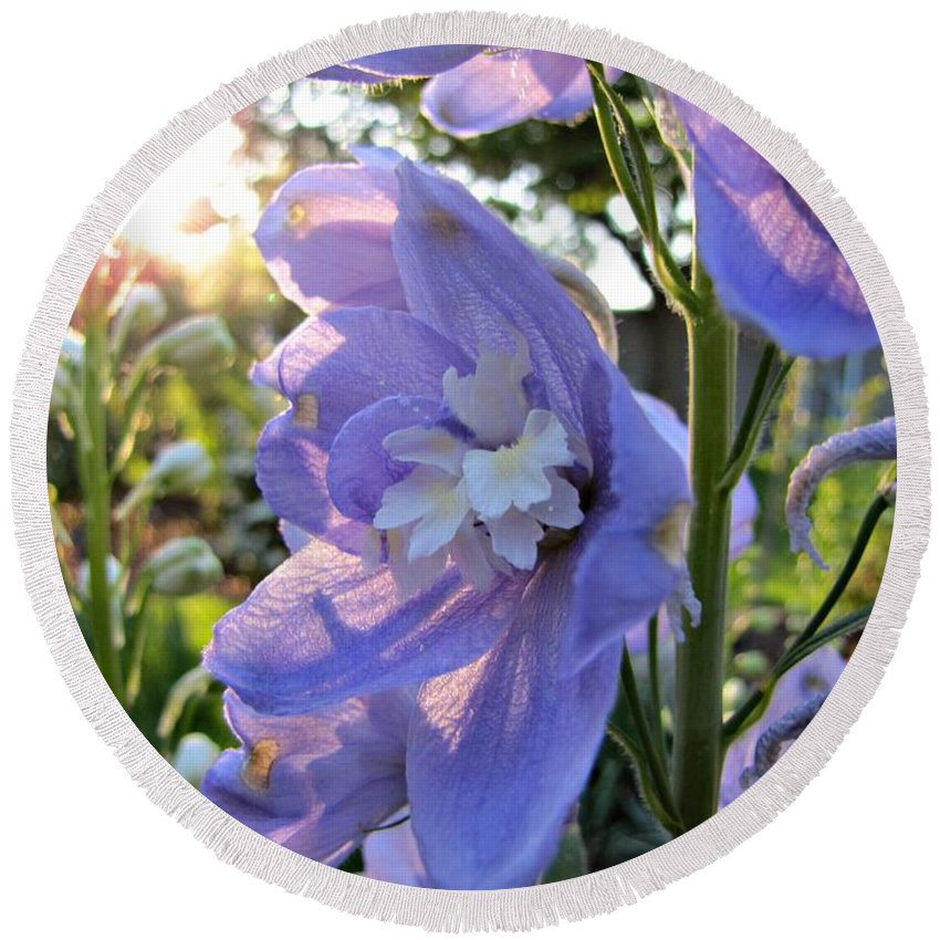 Aurora Light Purple Delphinium And Sunset Round Beach Towel featuring the photograph Aurora Light Purple Delphinium And Sunset No. 2 by Jessica Tolemy