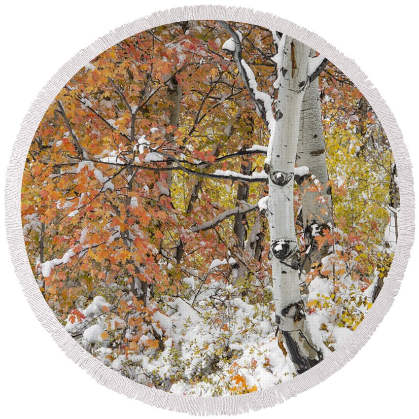 Aspen Forest Round Beach Towel featuring the photograph Autumn Aspens 7 by Leland D Howard
