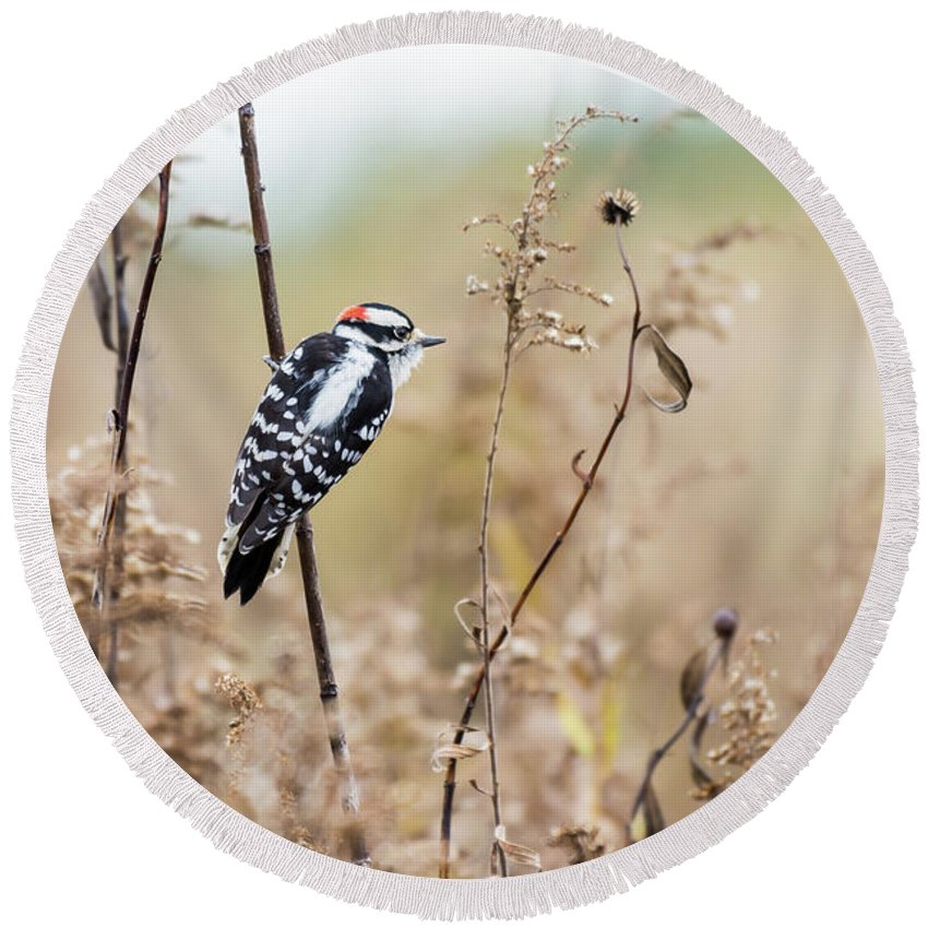 Downy Woodpecker Round Beach Towel featuring the photograph Autumn At The Meadows by Henry Kim