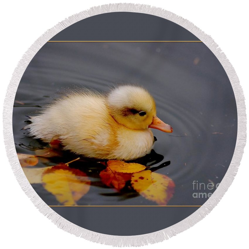 Bird Round Beach Towel featuring the photograph Autumn Baby by Jacky Gerritsen