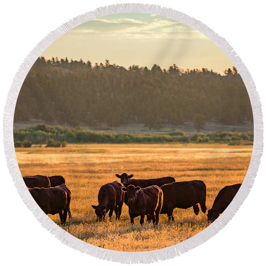 Black Angus Round Beach Towel featuring the photograph Autumn Herd by Todd Klassy