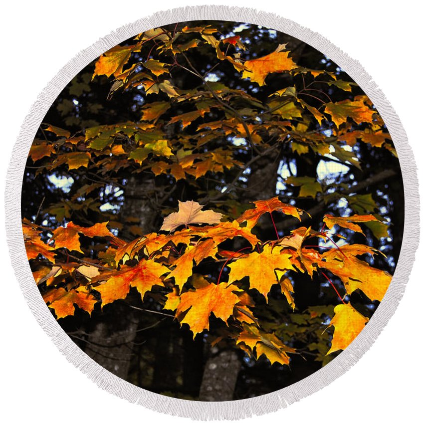 Autumn Round Beach Towel featuring the photograph Autumn Leaves by Kathleen Sartoris