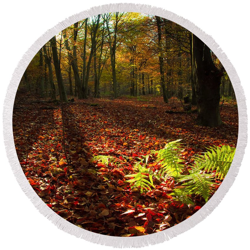 Fern Round Beach Towel featuring the photograph Autumn Light by Will Gudgeon