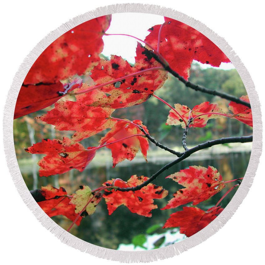 Nature Round Beach Towel featuring the photograph Autumn Maple by Steven Scanlon