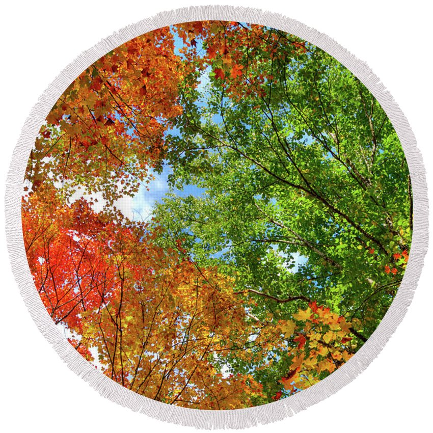 Trees Round Beach Towel featuring the photograph Autumn Nature by Maxim Images Prints