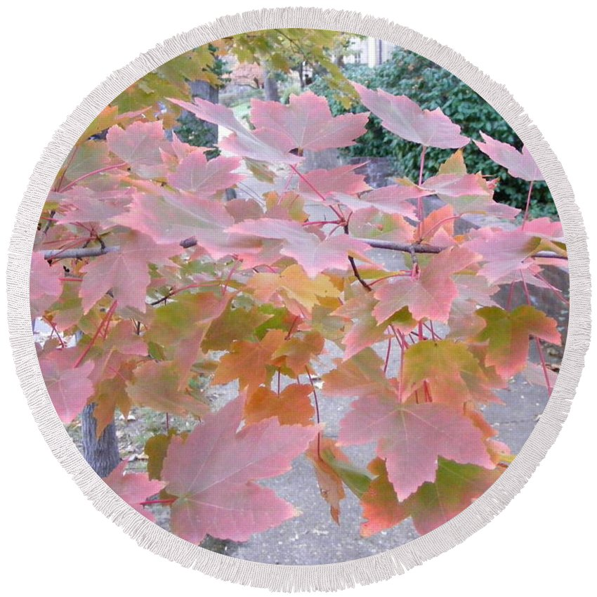 Photography Round Beach Towel featuring the photograph Autumn Pink by Nancy Kane Chapman