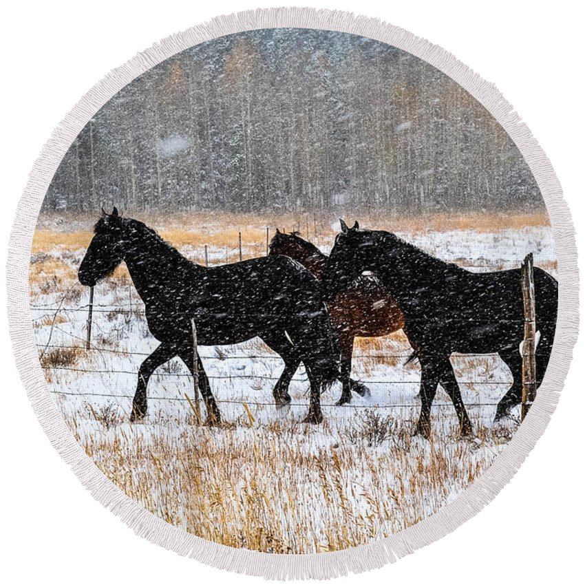 Horse Round Beach Towel featuring the photograph Autumn Snow by Jody Partin