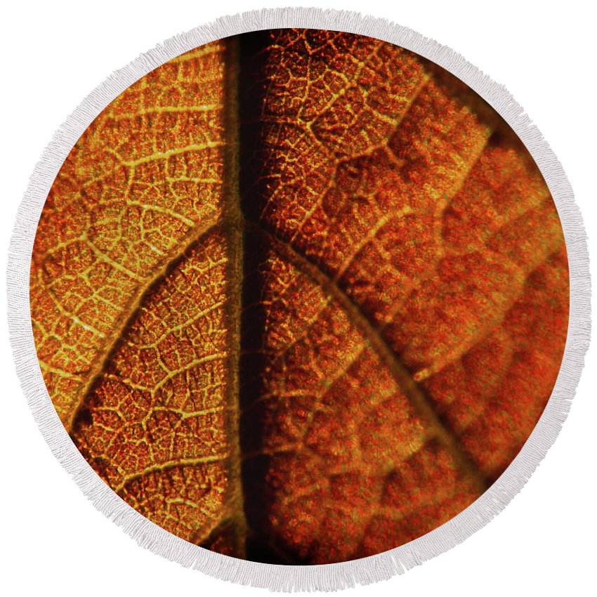 Leaf Round Beach Towel featuring the photograph Autumn Veins by Absorb Productions