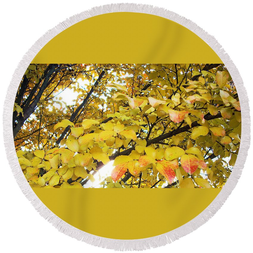Fall Pictures Round Beach Towel featuring the photograph Autumns Gold by Karin Dawn Kelshall- Best