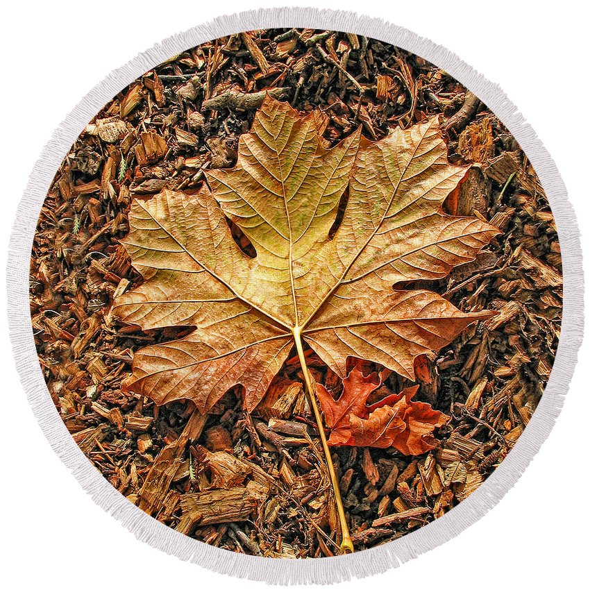 Leaf Round Beach Towel featuring the photograph Autumn's Textured Maple Leaf by Jennie Marie Schell