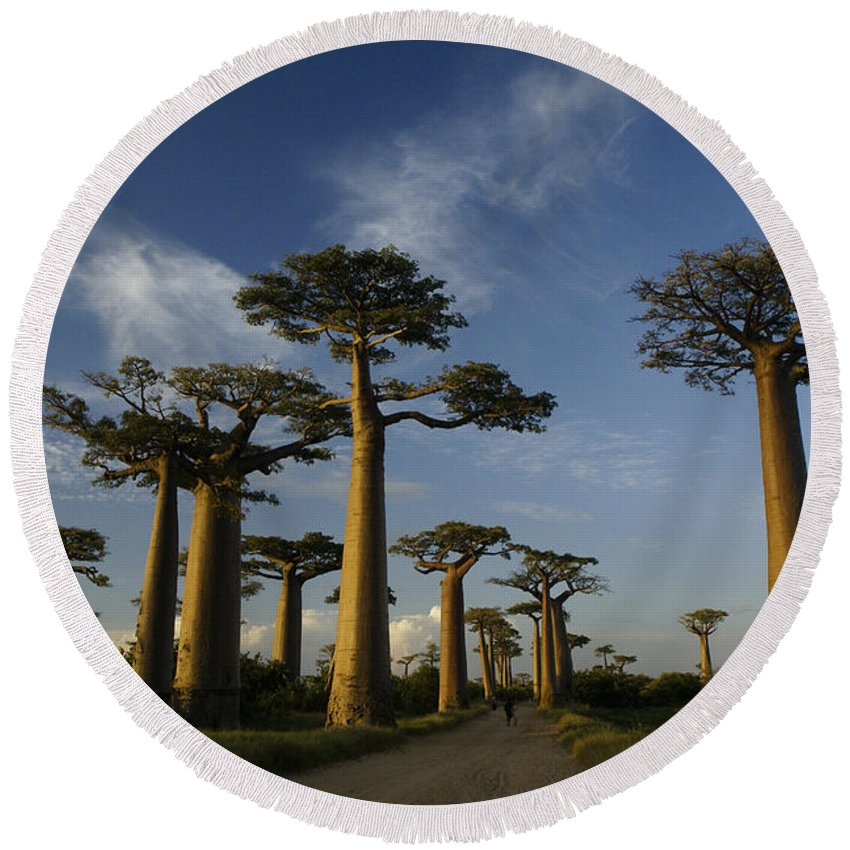Madagascar Round Beach Towel featuring the photograph Avenue Des Baobabs by Michele Burgess