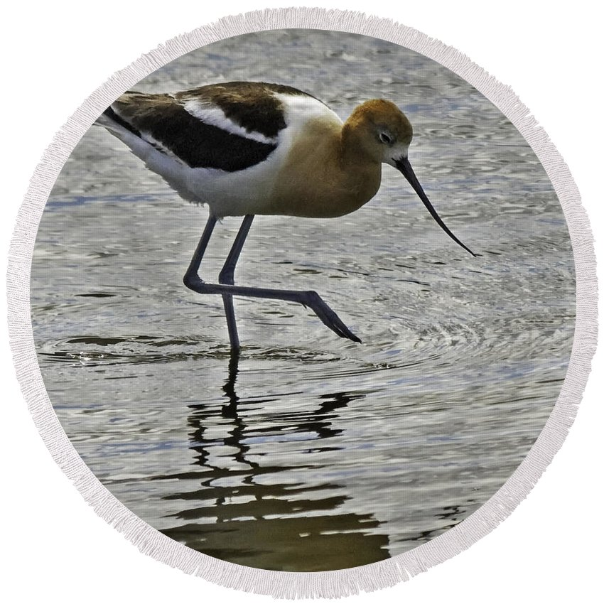 Wildlife Round Beach Towel featuring the photograph Avocet by Richard Rivard