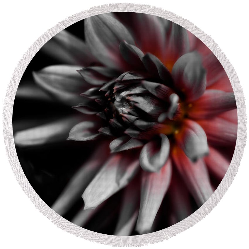 Asteraceae Family Round Beach Towel featuring the photograph Awakening by Venetta Archer