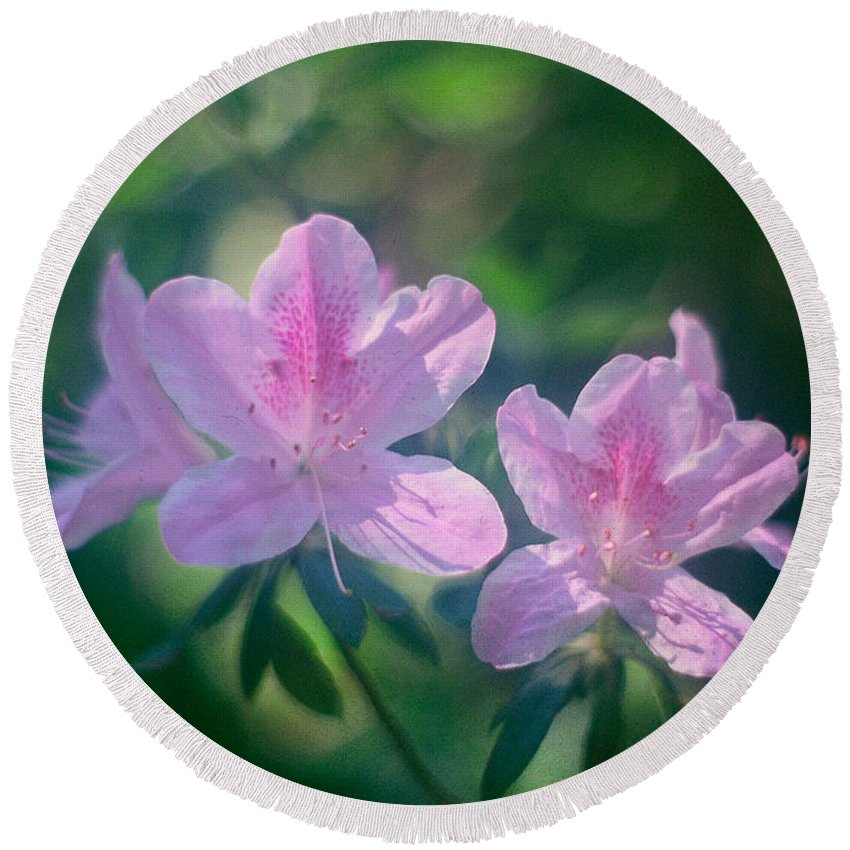 Phil Penne Round Beach Towel featuring the photograph Azaleas by Phil Penne
