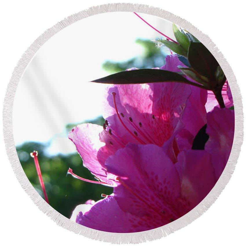 Flower Round Beach Towel featuring the photograph Azaleas by Sarah Houser