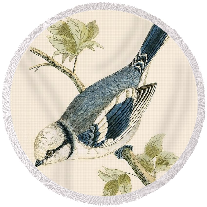 Bird Round Beach Towel featuring the painting Azure Tit by English School