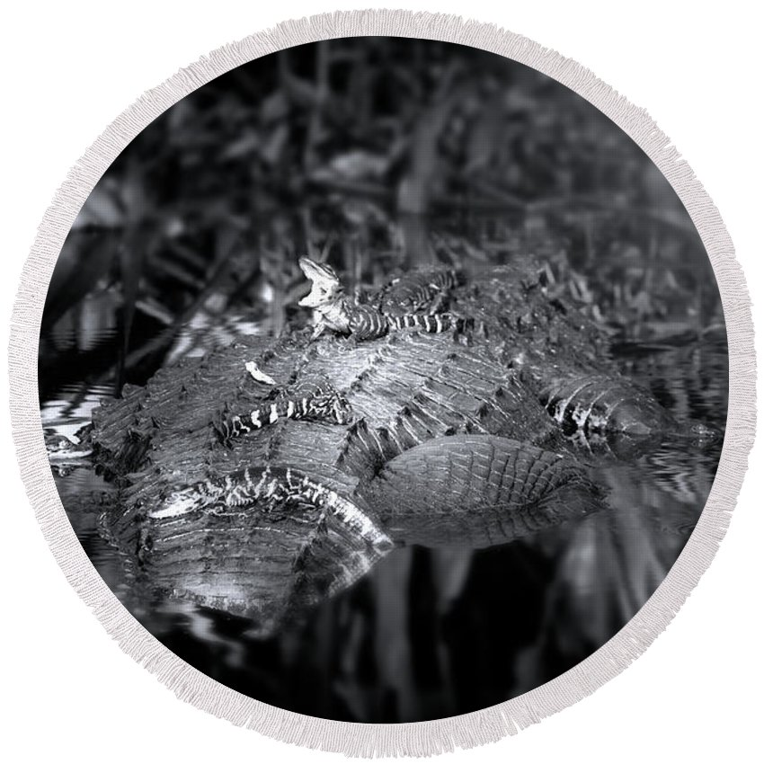 Alligator Round Beach Towel featuring the photograph Baby Alligators On Board by Mark Andrew Thomas