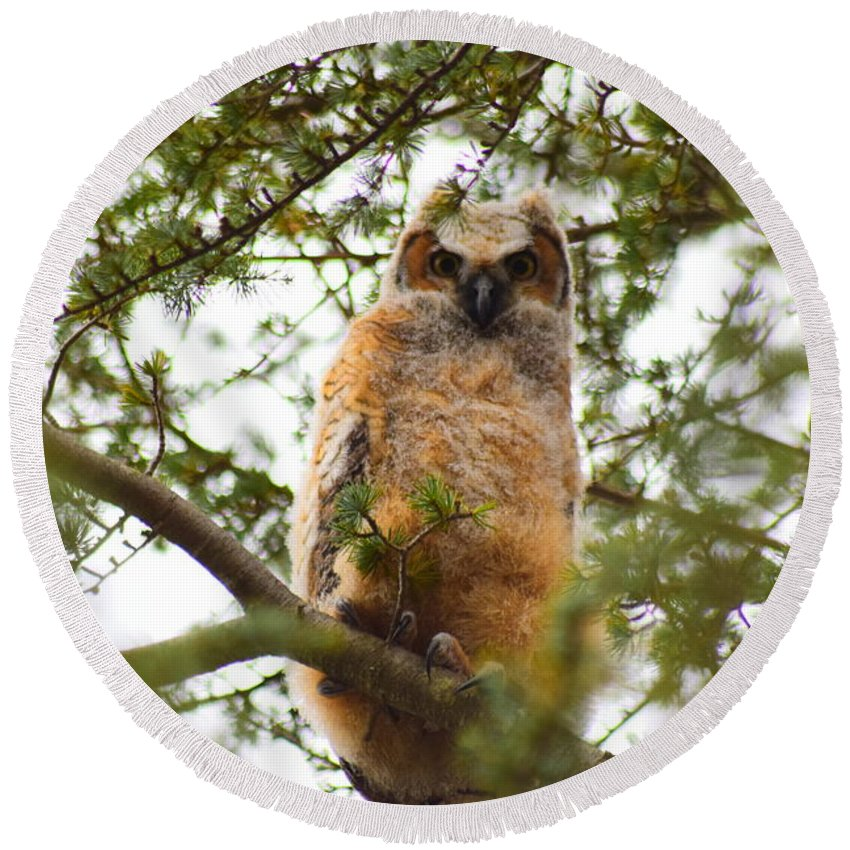 Owl Round Beach Towel featuring the photograph Baby Great Horned Owl by Cheryl Braley