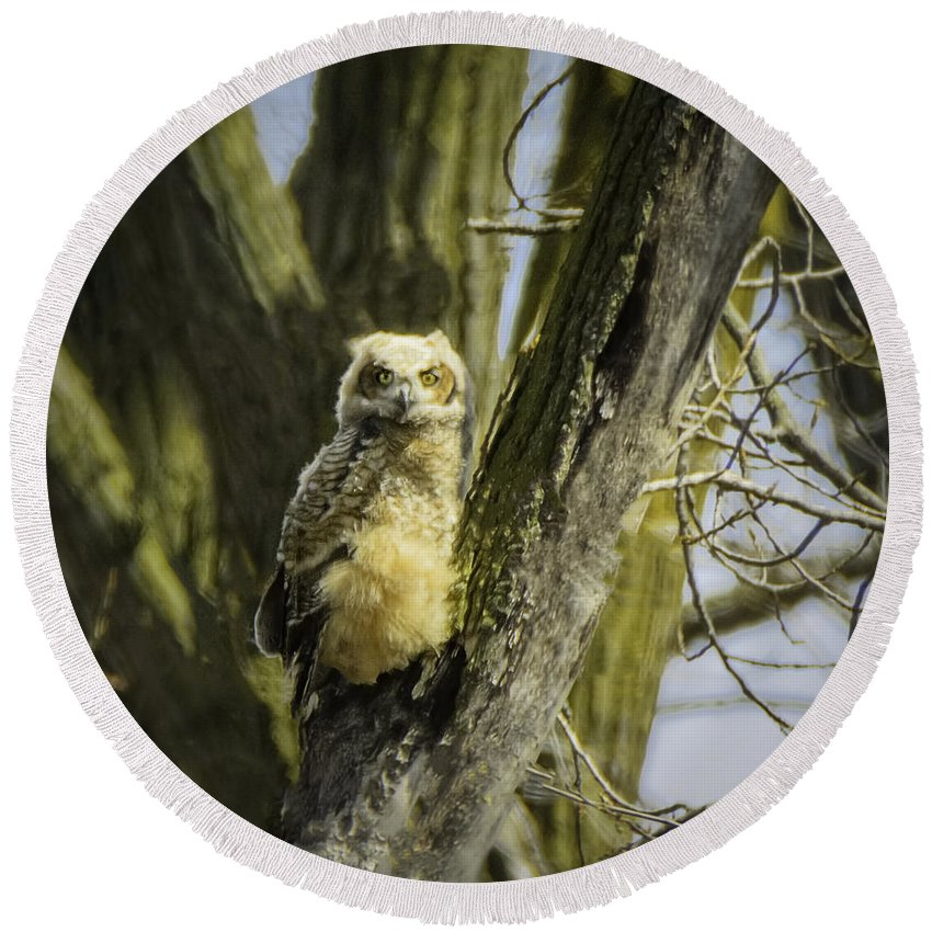 Great Horned Owl Round Beach Towel featuring the photograph Baby Great Horned Owl by LeeAnn McLaneGoetz McLaneGoetzStudioLLCcom