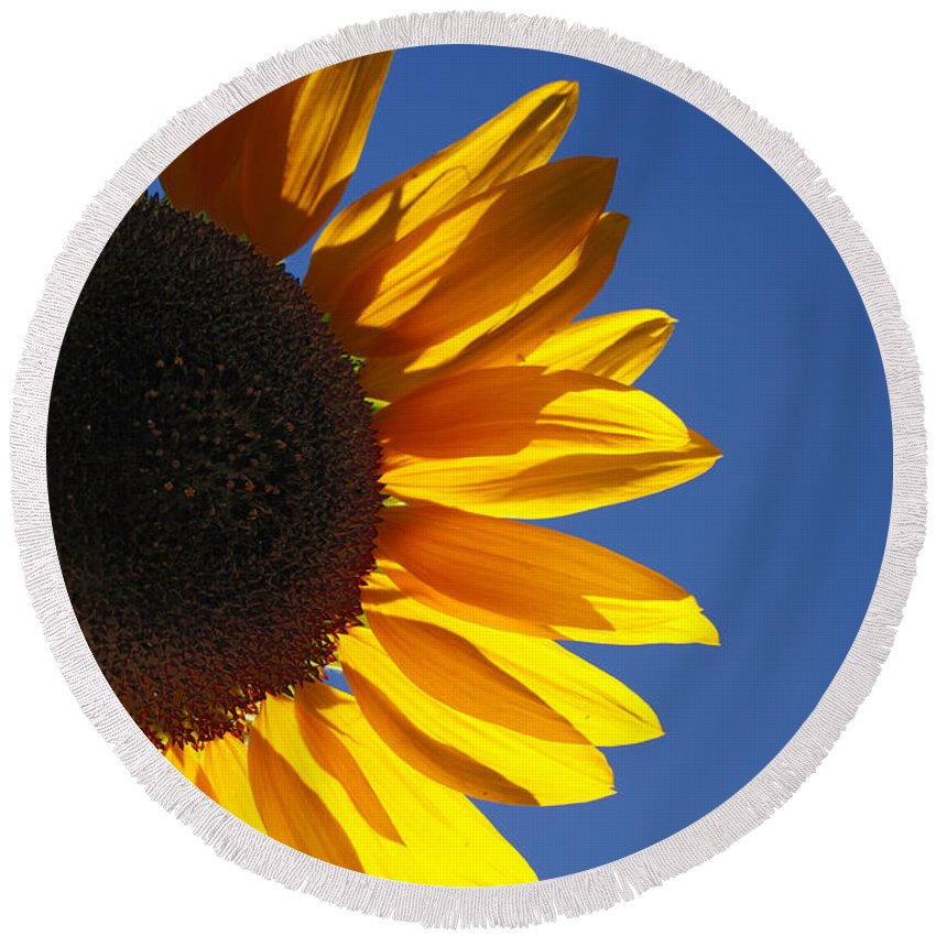 Back Light Round Beach Towel featuring the photograph Backlit Sunflower by Gaspar Avila