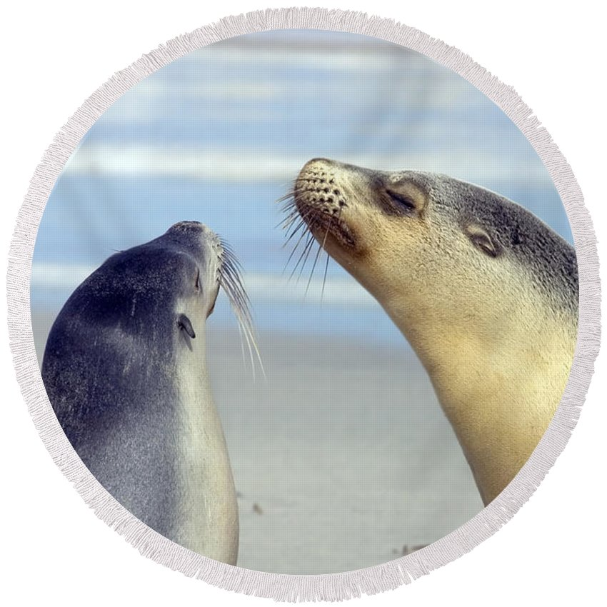 Sea Lion Round Beach Towel featuring the photograph Backtalk by Mike Dawson
