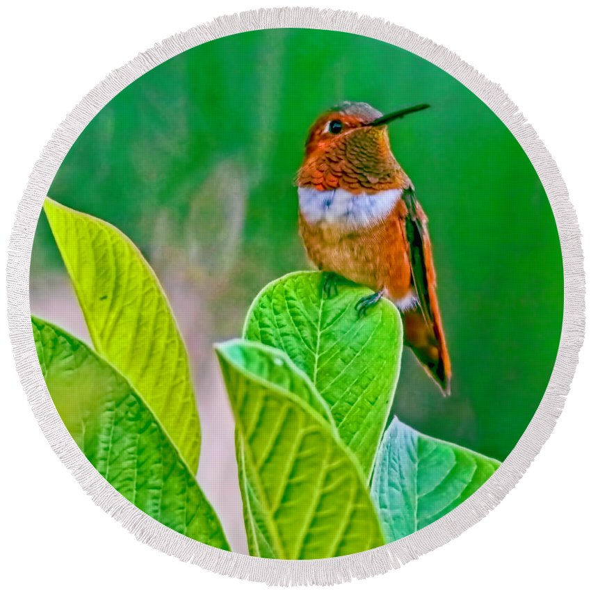 Tiny Bird Perched On A Leaf Round Beach Towel featuring the photograph Backyard Hummingbird #22 by Edita De Lima