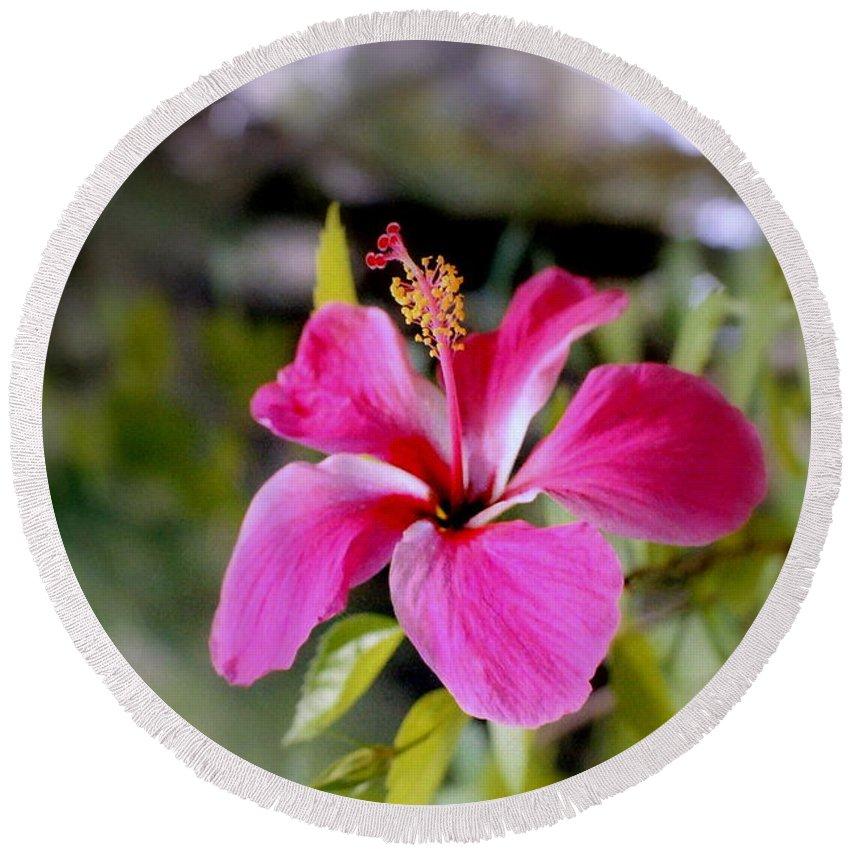 Flowers Round Beach Towel featuring the photograph Bahamian Flower by Deborah Crew-Johnson