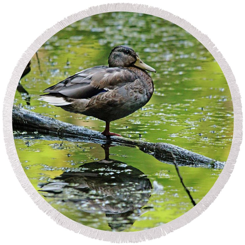 Mallard Round Beach Towel featuring the photograph Balance by Debbie Oppermann