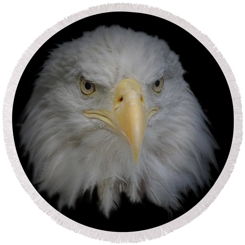 Animal Round Beach Towel featuring the photograph Bald Eagle 1 by Ernie Echols