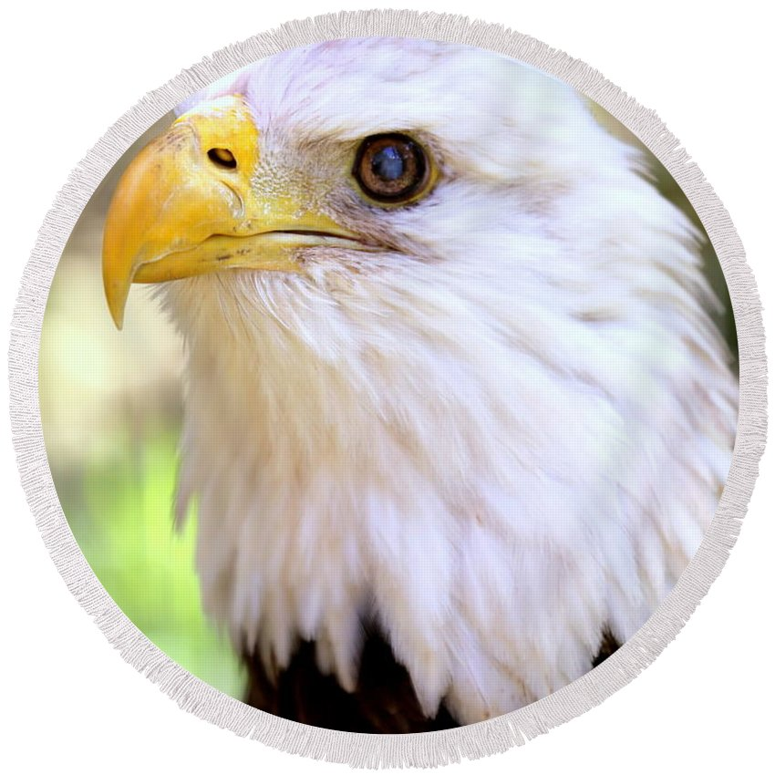 Bald Eagle Round Beach Towel featuring the photograph Bald Eagle 1 by Imagery-at- Work