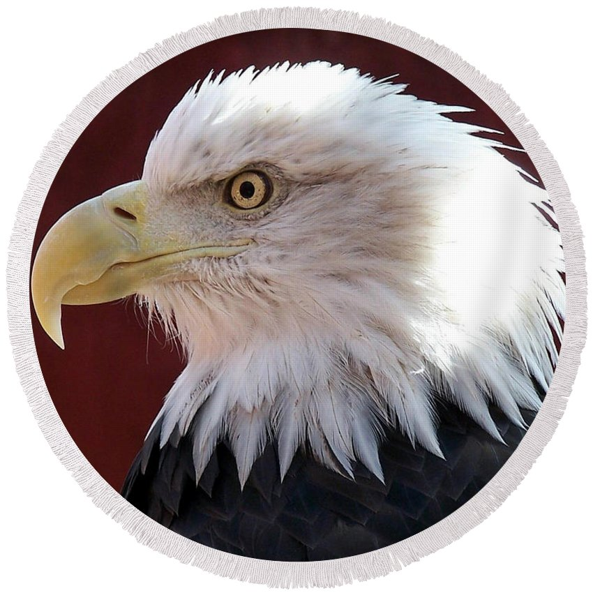 Animal Round Beach Towel featuring the photograph Bald Eagle by Ernie Echols
